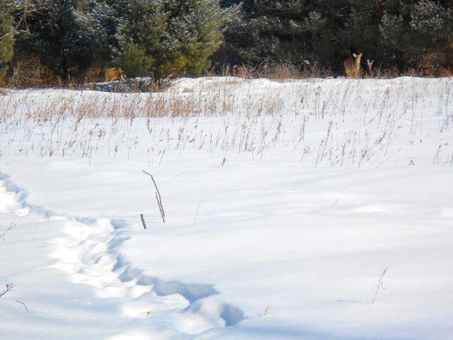 deer at lake elmo