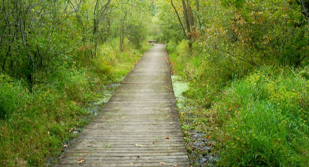 tamarack nature center boardwalk
