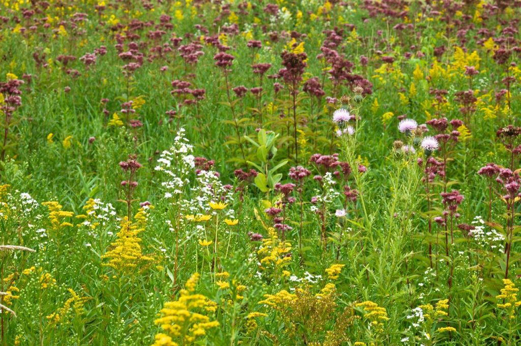 autumn wild flower at tamarack nature center