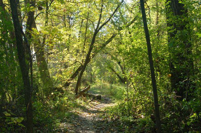 wooded hiking trail rice creek