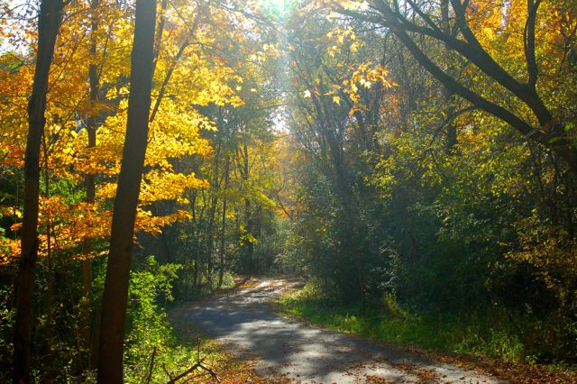 Fall colors in Pioneer Park