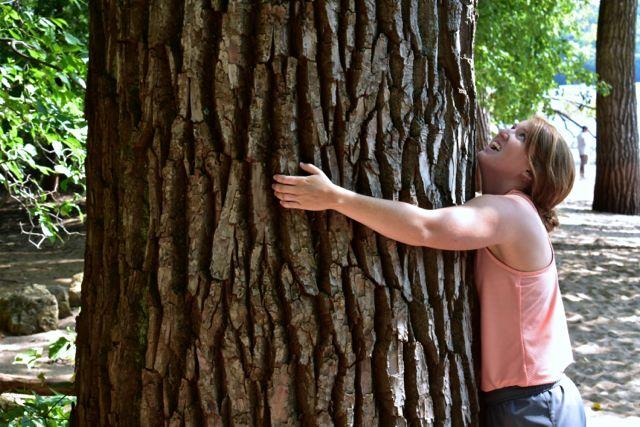 big tree afton state park