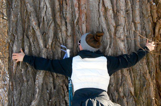 Tree-hugging skier