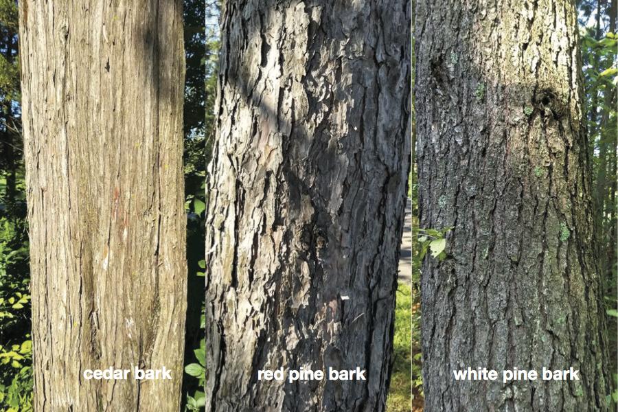 cedar, red pine and white pine bark