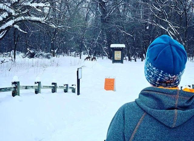 deer on the ski trail