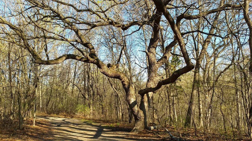 hiking trail locke county park