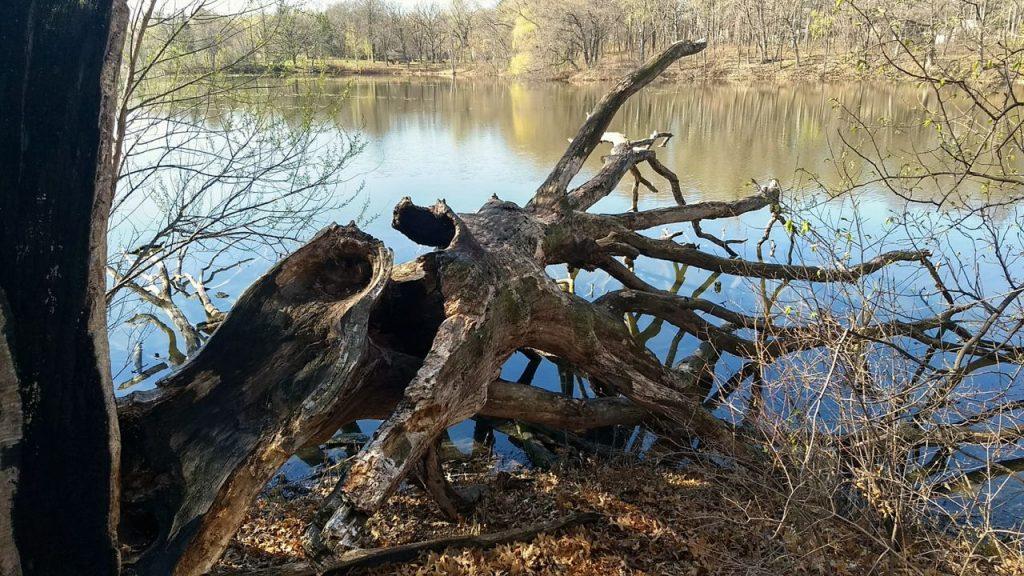 fallen tree highland lake