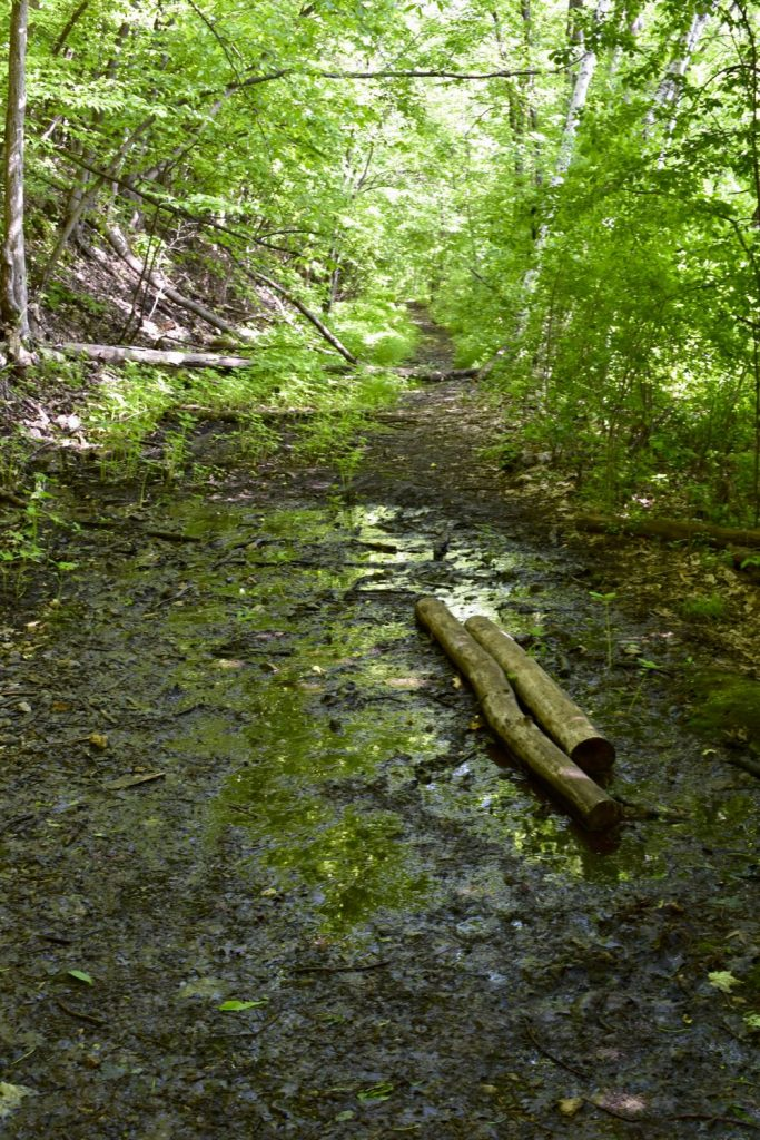 hiking trail mud, st croix bluffs
