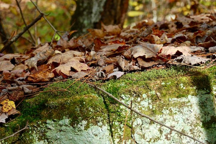 fallen leaves on a moss-covered rock