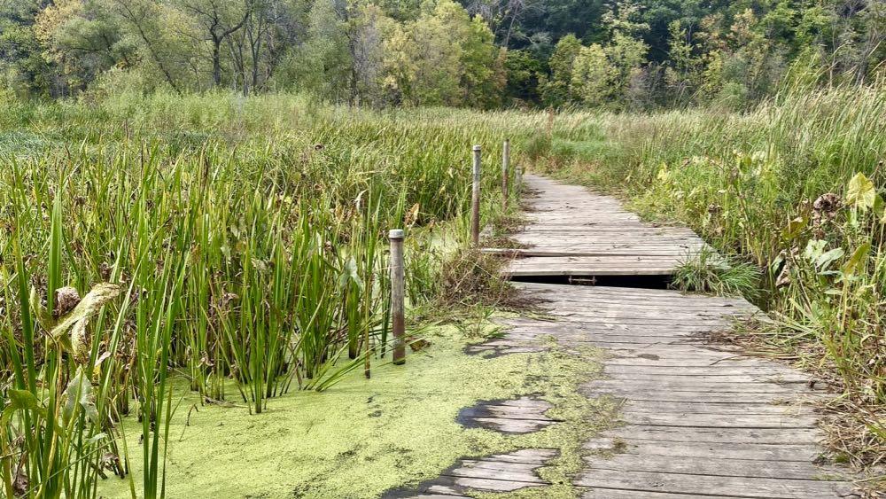 boardwalk at crosby farm regional park