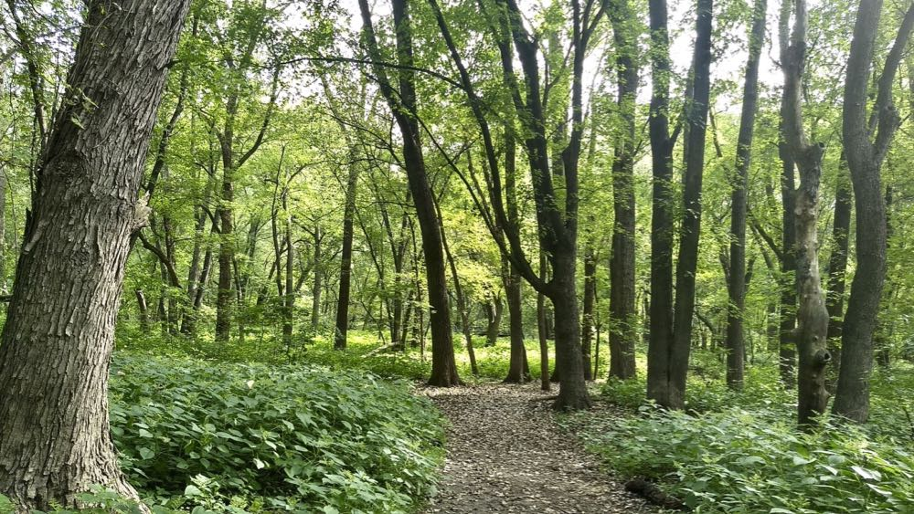 crosby farm regional park, forested hiking trail