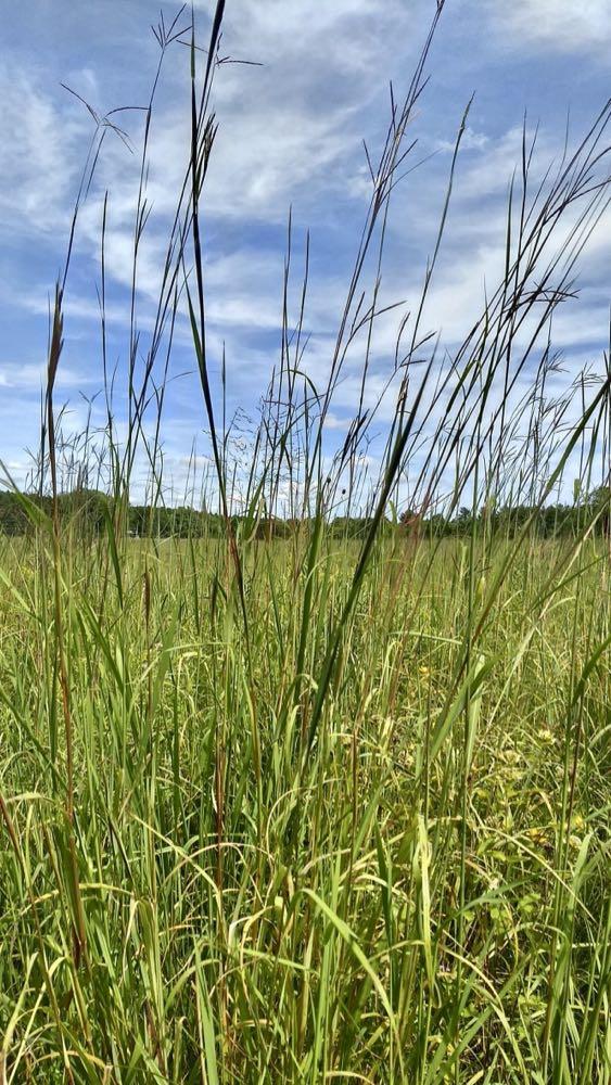 prairie grasses at pine point