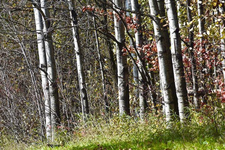 aspen grove crow hassan park reserve