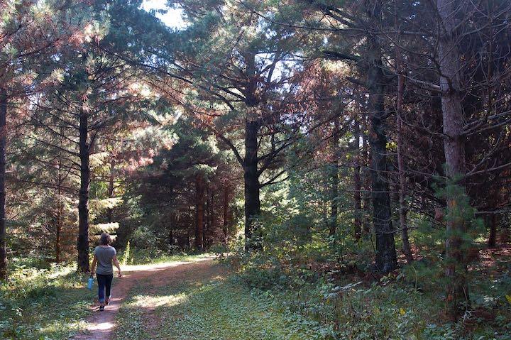 trail through pine grove