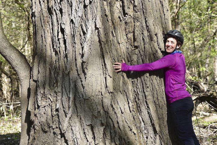 huge tree in crosby farm regional park