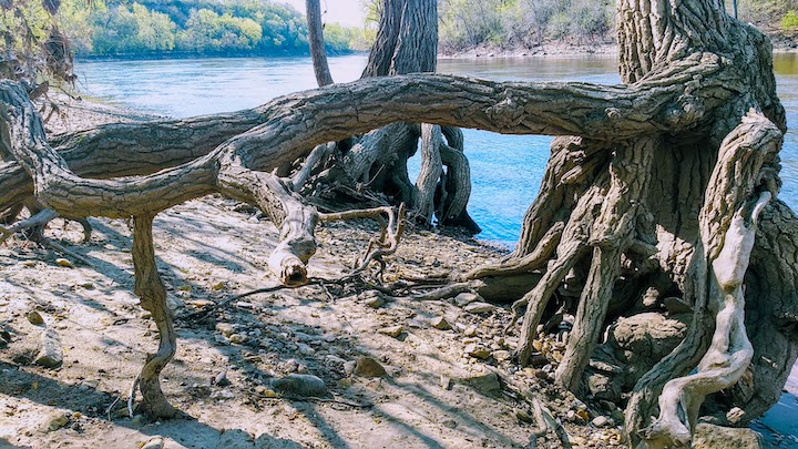 tree roots hidden falls regional park