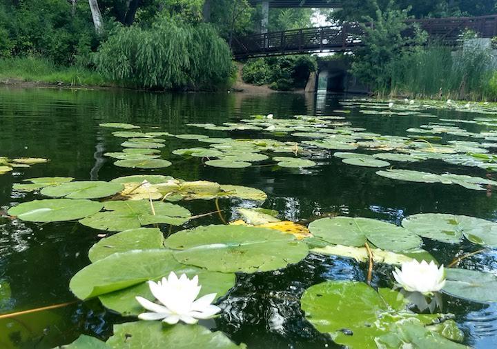 brownie lake, mpls chain of lakes
